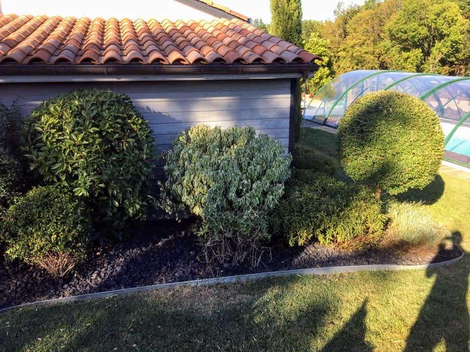 Tonte et taille des arbustes